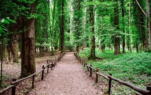 foresta-umbra